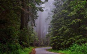 trees-1587301_1920