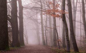 fog-2917232_1920