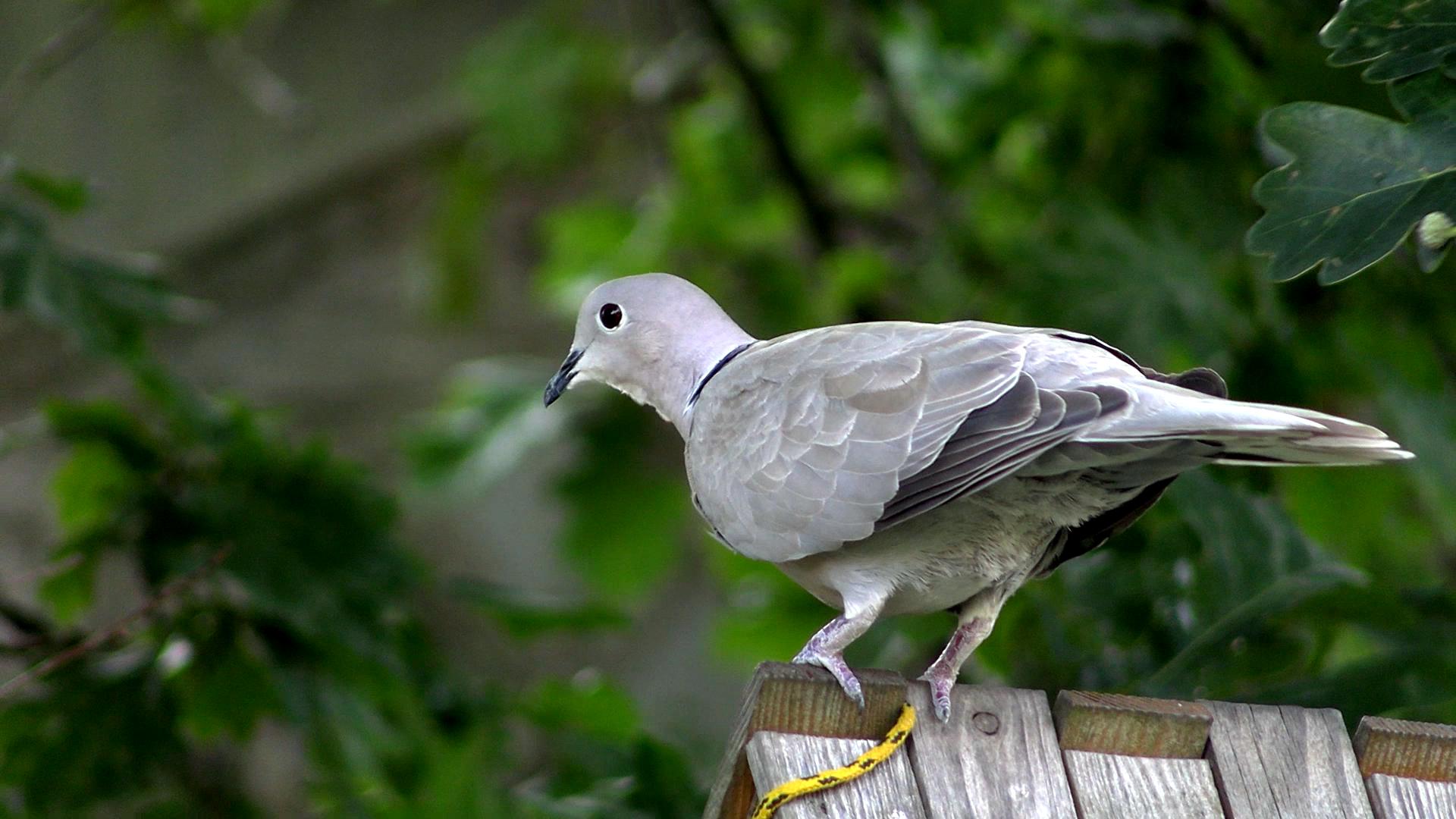 Ciekawostki ekologiczne: czy dokarmiać ptaki latem?